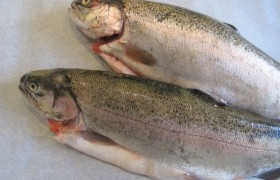Image for 'Fresh Whole Salmon Trout'