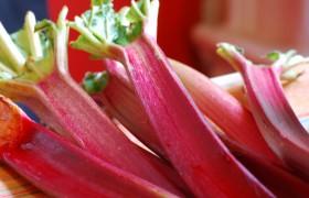 Image for 'Rhubarb'