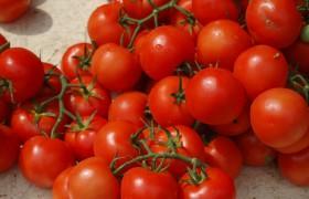 Image for 'Vine Tomato Casserole'